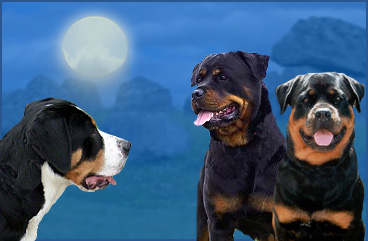 Rottweilers & Greater Swiss Mountain Dogs
